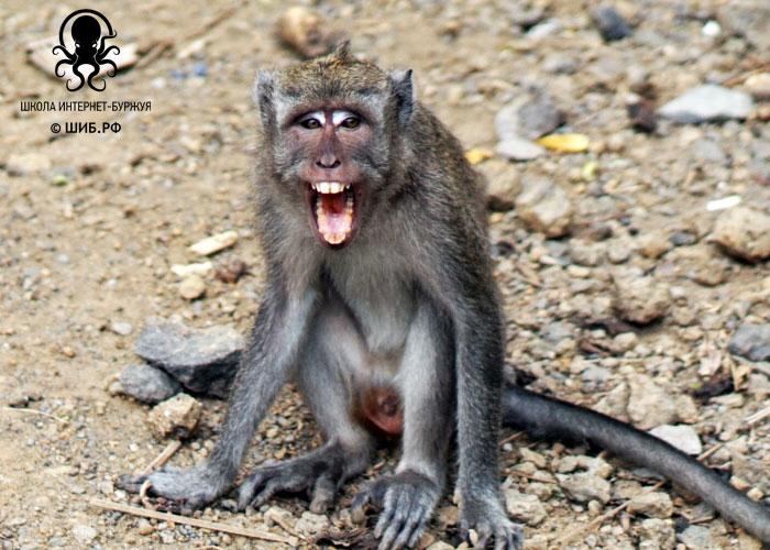 Управление обезьянами